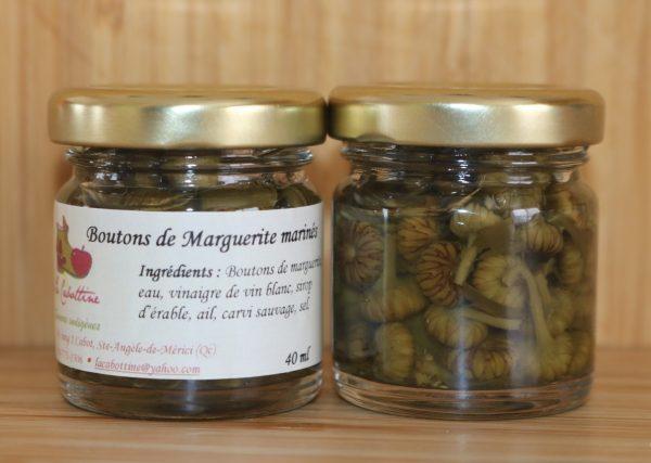 Boutons-de-marguerite-600×427